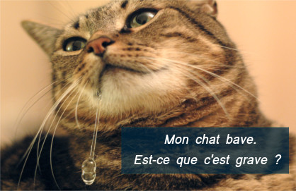 causes d'hypersalivation chez les chats