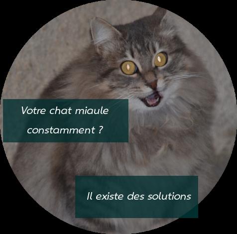 Quelles solutions pour un chat qui miaule constamment ?