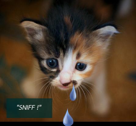 astuces pour un chat qui a le nez qui coule