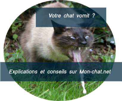 Risques d'un chat qui vomit