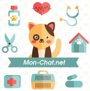 conseils santé chat